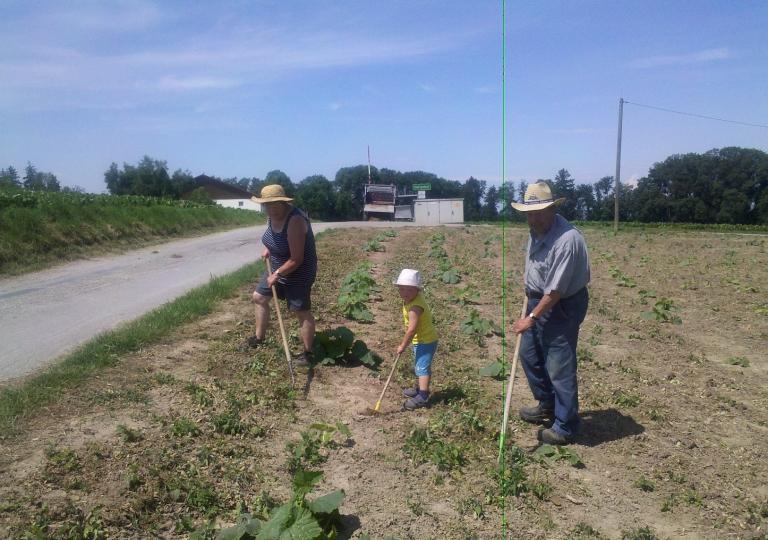 Landwirtschaft Jungbauernhof und Hartenhof